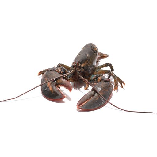 2 3 Live Lobster Lobster Crab Sendik S Food Market